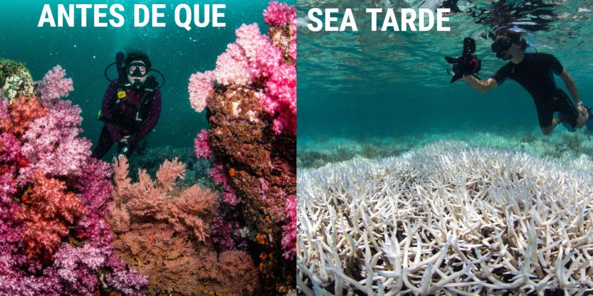 Conoce Los Mejores Arrecifes De Coral Del Mundo Antes De Que Desaparezcan Chismes Today